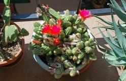 Potted cactus garden on a tri-level condo building walkway, Stock Photos