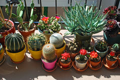 Potted cactus garden on a tri-level condo building walkway,. Image shows a potted cactus garden on a tri-level condo buuilding walkway in Laguna Woods retirement royalty free stock images