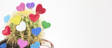 Potted cactus with heart shaped stickers Royalty Free Stock Photos