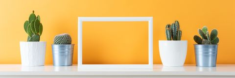 Potted cactus house plants on white shelf against pastel mustard colored wall and picture frame mock up banner. Collection of various cactus plants in different royalty free stock photography