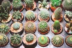 Potted cactus Stock Images
