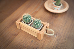 Potted cactus. On my table Royalty Free Stock Image