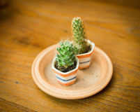 Potted cactus. On my table Royalty Free Stock Photography