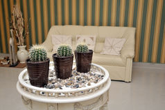 Potted Cactus On A Table Royalty Free Stock Photography