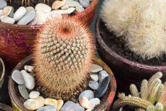 Potted cactus plants collections Stock Photography