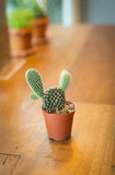 Potted cactus. Cactus and succulents collection in small flowerpots. The rustic interior. With retro filter effect Stock Image