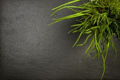 Potted chives plant on slate with copyspace Royalty Free Stock Photography