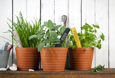 Potted chives, sage and parsley Stock Images