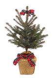 Potted christmas tree Royalty Free Stock Images