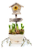 Potted daffodils and little birdhouse Stock Photos