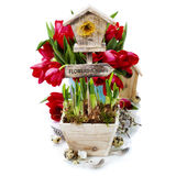 Potted daffodils and little birdhouse Royalty Free Stock Image