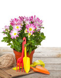 Potted flower and garden tools Stock Photography
