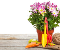 Potted flower and garden tools Stock Photos
