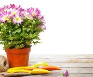 Potted flower and garden tools Stock Photo