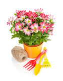 Potted flower and garden tools Stock Images
