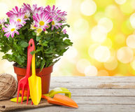 Potted flower and garden tools Stock Image