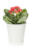 Potted flower Stock Photography