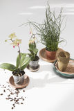 Potted Flower Plants Stock Images