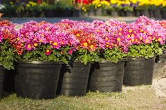 Potted flower Royalty Free Stock Images