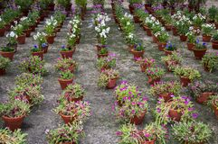 Potted flower plants Royalty Free Stock Images
