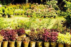 Potted flower plants Stock Photo