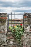 Potted flowering plant and ancient wall with metal grid Stock Image