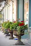 Potted Flowers. Row of potted flowers on sidwalk Royalty Free Stock Photo