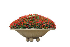 Potted Flowers Royalty Free Stock Images