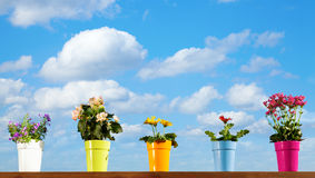 Potted flowers Royalty Free Stock Photos