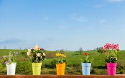 Potted flowers Royalty Free Stock Image