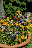 Potted Flowers. Terra Cotta Pot with a mixture of colorful flowers Stock Photography