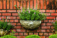 Potted for flowers with background Stock Images