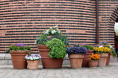 Potted flowers on the brick wall background Stock Image