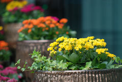 Potted flowers. Colourful potted flowers outside the office building Stock Photos