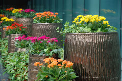 Potted flowers. Colourful potted flowers outside the office building Stock Photography