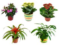 Potted flowers isolated on white Royalty Free Stock Photography