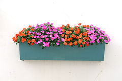 Free Potted Flowers On The Wall Royalty Free Stock Photography - 50821647