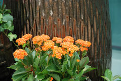 Potted flowers. Orange potted flowers in the summer Stock Photos