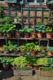 Potted flowers and plants Royalty Free Stock Photo