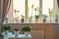 Potted flowers. And plants decor in modern room. Sunny warm light from window Stock Photos