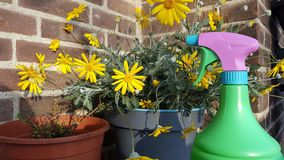 Potted flowers and spray bottle Stock Photography