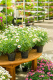 Potted flowers on table in garden shop. Potted flowers on table in garden centre greenhouse store Royalty Free Stock Photo