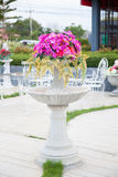Potted flowers. With trees and flowers in pots. Is placed in the garden to decorate the garden Royalty Free Stock Photo