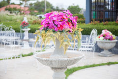 Potted flowers. With trees and flowers in pots. Is placed in the garden to decorate the garden Royalty Free Stock Photography