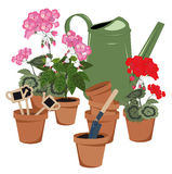 Potted flowers and watering can Stock Photos