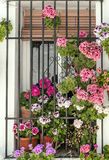 Potted  flowers in a window Royalty Free Stock Photo