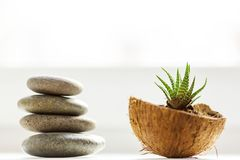 Aloe. Potted flowers on the windowsill in a coconut pot. Adorable home creative design royalty free stock photo