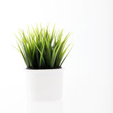 Potted Fresh Young Green Grass Stock Images