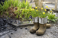 Potted galoshes Royalty Free Stock Photography
