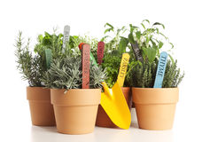 Potted garden herbs and shovel isolated Royalty Free Stock Photo